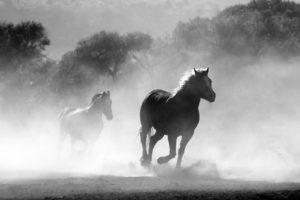 Horse11,23
