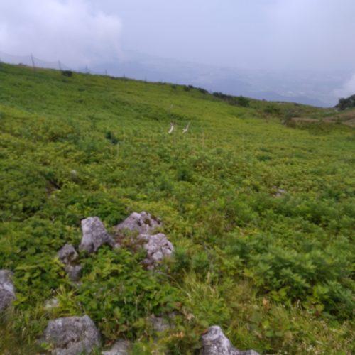 Mt.ibuki mid3